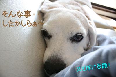 3_20081009233022.jpg
