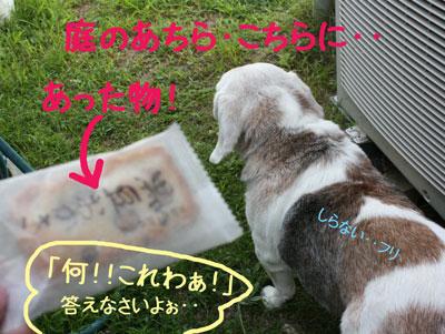 4_20080914152915.jpg