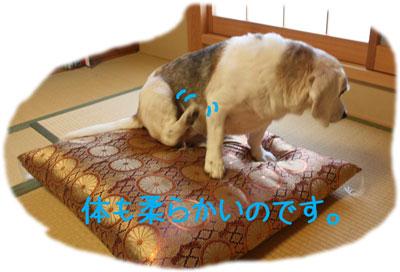 4_20080915151144.jpg