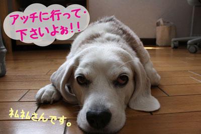 4_20080916112537.jpg