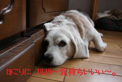 4_20080919132516.jpg