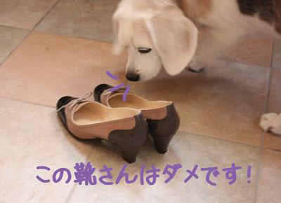 4_20080923105803.jpg
