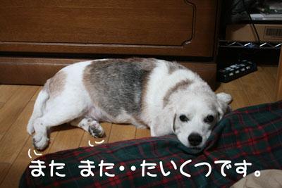 4_20080930120800.jpg