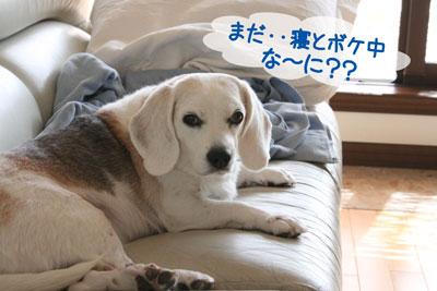 4_20081009120353.jpg