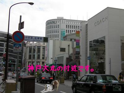 5_20080918211104.jpg
