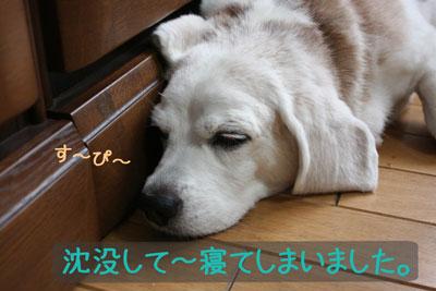 5_20080919132522.jpg