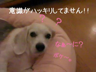 5_20080921173046.jpg