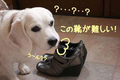 5_20080923105810.jpg