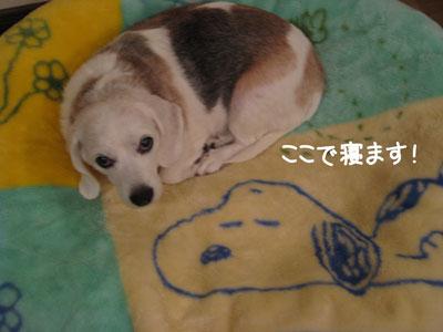 5_20081002011441.jpg