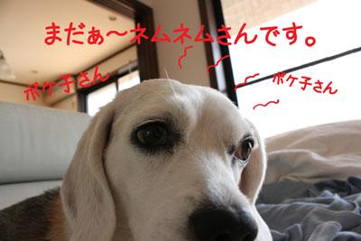 5_20081009120359.jpg