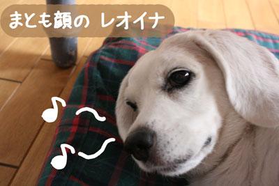 6_20080913162600.jpg