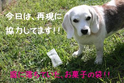 6_20080914152929.jpg