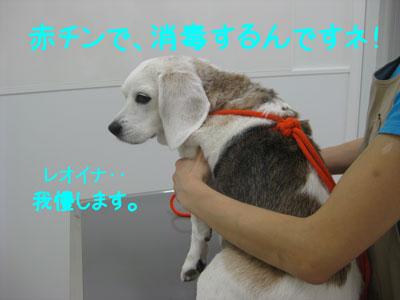 6_20081010215047.jpg