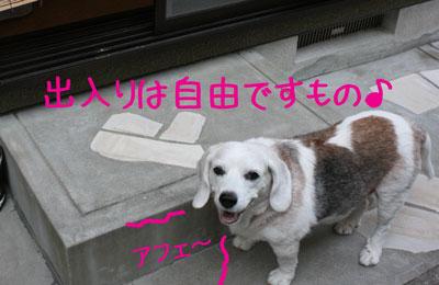 7_20080914152937.jpg