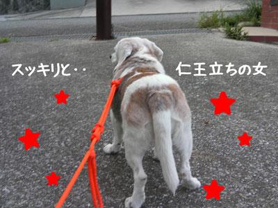 7_20080919161939.jpg