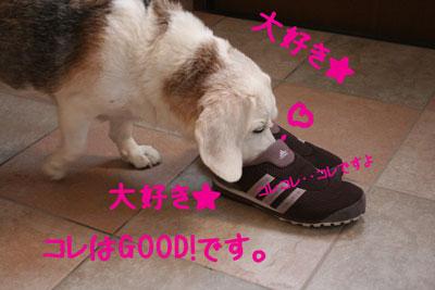 7_20080923105825.jpg