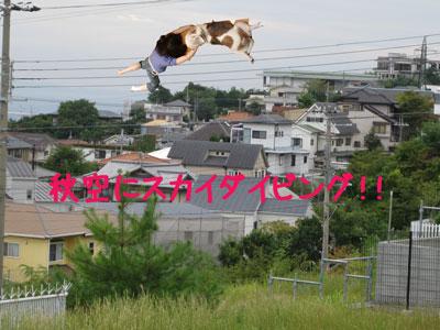 7_20080929130655.jpg