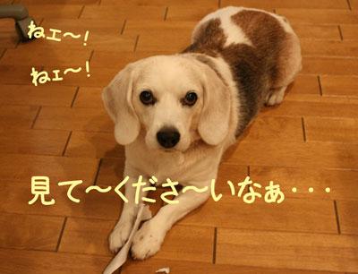 7_20081007165858.jpg