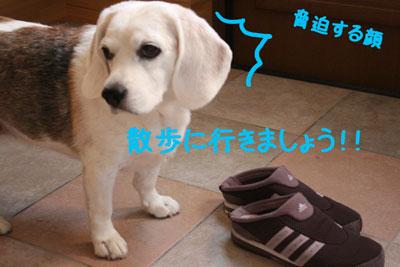 8_20080923105832.jpg