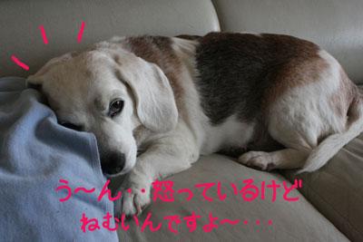 8_20081002214027.jpg
