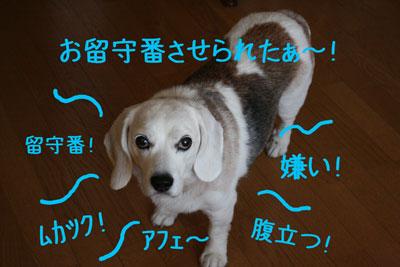 9_20080923182630.jpg