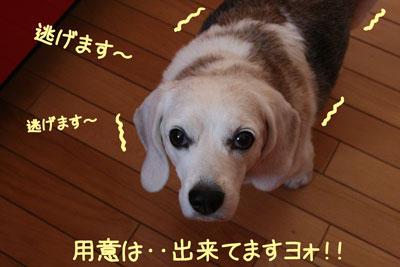 9_20081005152507.jpg