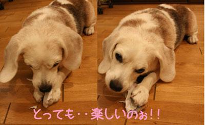 9_20081007165912.jpg