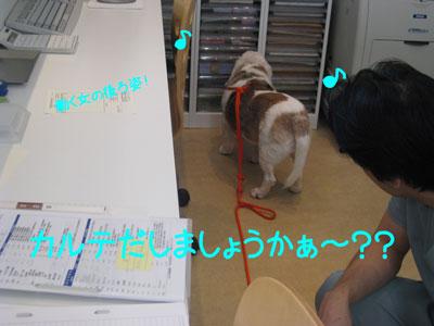 9_20081010215111.jpg