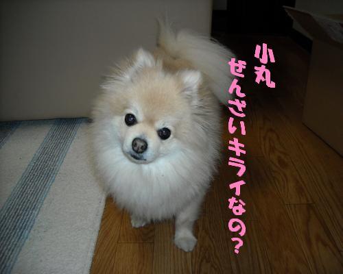 0108yuki1.jpg