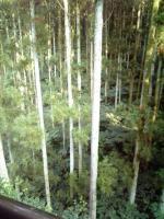 塚越屋 部屋から 杉