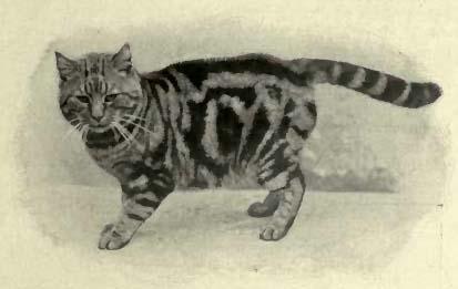 cat20110220-2.jpg