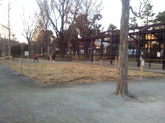 1月19日の中庭