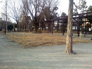 1月20日の中庭