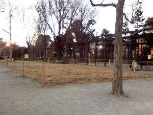 1月21日の中庭