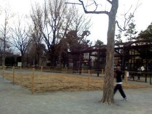 1月22日の中庭