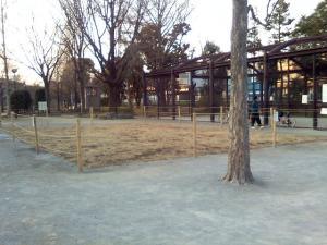 1月25日の中庭