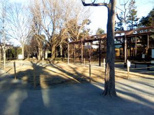 1月26日の中庭