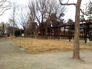1月28日の中庭