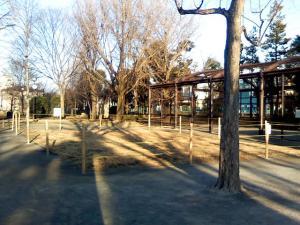 1月29日の中庭