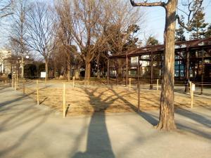 1月31日の中庭