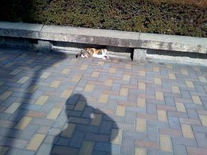 浜離宮のネコ