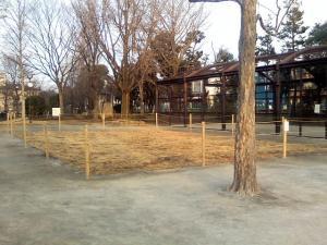 2月1日の中庭