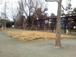 2月11日の中庭