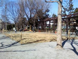 2月20日の中庭