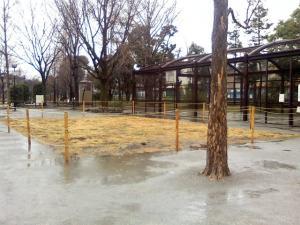 2010年2月28日の中庭