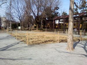 3月3日の中庭