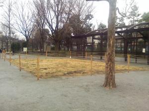 3月6日の中庭