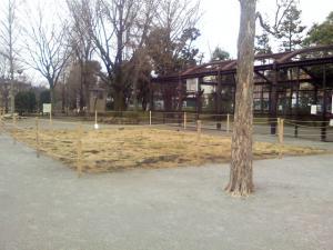 3月8日の中庭