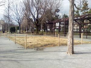 3月10日の中庭