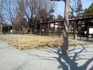 3月12日の中庭